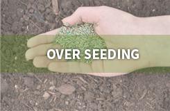 Over Seeding | Vista Turfcare