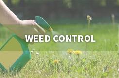 Weed Control | Vista Turfcare